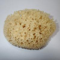 MOØSKÁ HOUBA Honeycomb 11-12 cm
