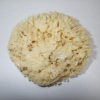 MOØSKÁ HOUBA Honeycomb 12-13 cm