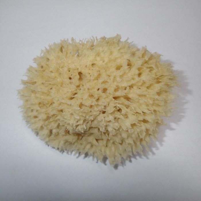 Moøská houba Honeycomb 9-10 cm - zvìtšit obrázek